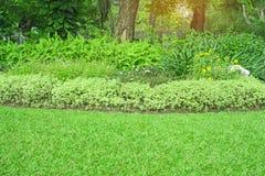 Yard vert frais d'herbe de tapis, pelouse lisse dans le beau jardin et bon soin aménageant en parc en parc public photographie stock