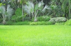 Yard vert frais d'herbe de tapis, pelouse lisse dans un beau jardin de palmiers et bon soin aménageant en parc en parc public photos stock
