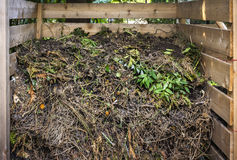 Yard waste in compost bin. Organic yard waste in wooden compost box for backyard garden composting Stock Photos
