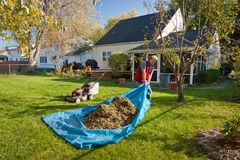 Yard Work. Man pulling tarp with grass and leaves Royalty Free Stock Photo