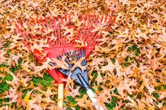 Yard work, fall leaves in kentucky with rakes. Rd and black plastic racks Royalty Free Stock Photo