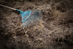 Yard work, preparation soil in garden with rake. Shoveling dry grass Stock Photo