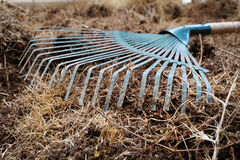 Yard work, preparation soil in garden with rake. Shoveling dry grass Royalty Free Stock Image
