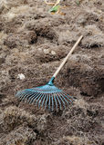 Yard work, preparation soil in garden with rake. Shoveling dry grass Royalty Free Stock Photo