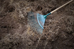 Yard work, preparation soil in garden with rake. Shoveling dry grass Royalty Free Stock Images