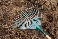 Yard work, preparation soil in garden with rake. Shoveling dry grass Stock Image