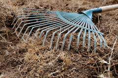 Yard work, preparation soil in garden with rake. Shoveling dry grass Stock Photography