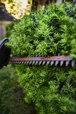 Cutting bushes with an electric hedge trimmer Royalty Free Stock Photos