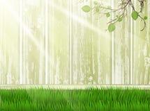 Yarda asoleada con la hierba