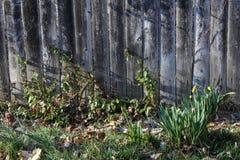 Yarda-Cerca-plantas Imagen de archivo