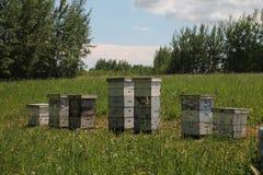 Yarda de la abeja en la colina Foto de archivo libre de regalías