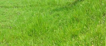 Yarda de la hierba Fotografía de archivo libre de regalías