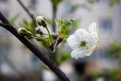 Yarda de la primavera imagenes de archivo