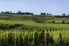 Yarda de la uva en Eguisheim, Francia Imagen de archivo
