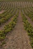 Yarda de la vid del vino Fotografía de archivo