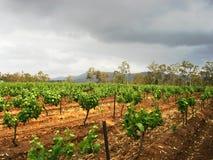 Yarda del vino Imagenes de archivo