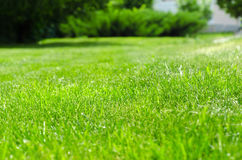 Yarda verde del césped Foto de archivo libre de regalías