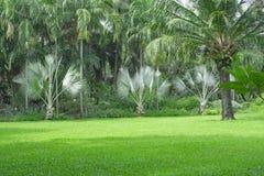 Yarda verde fresca de la hierba de alfombra, césped liso en un jardín hermoso de las palmeras y buen cuidado que ajardina en el p foto de archivo