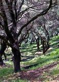 Yarda verde oliva Foto de archivo