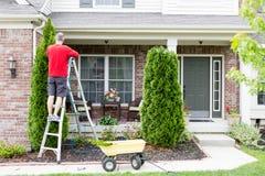 Yardarbeit um die Hauszutat Thujabäume stockfotografie