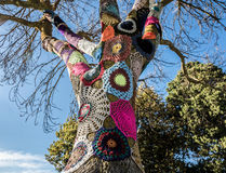 Yarn bombed tree Stock Photography