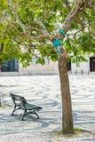 Yarn bombing in trees. European park. Royalty Free Stock Image