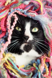 Yarn Cat Royalty Free Stock Photography