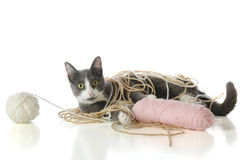 Yarn-Tangled Kitty Royalty Free Stock Image