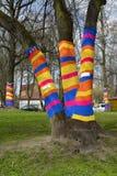 Yarnbombing on trees in Kaliningrad, Russia Royalty Free Stock Photos