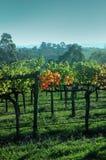 yarra виноградника Австралии Стоковые Фотографии RF