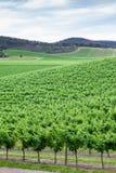 Yarra doliny winogrady Zdjęcia Royalty Free