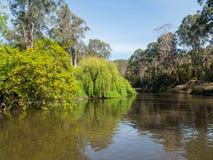 Yarra-Fluss, der die Stadtrandsiedlung von Warrandyte in Australien durchfließt lizenzfreie stockbilder