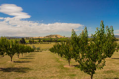 Yarra Glen Orchard Foto de Stock Royalty Free