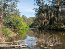 Yarra River flowing through the outer suburb of Warrandyte in Australia. The Yarra River flowing through Warrandyte in the City of Manningham in Melbourne royalty free stock image