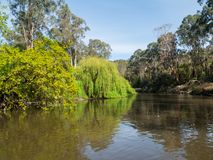 Yarra River flowing through the outer suburb of Warrandyte in Australia. The Yarra River flowing through Warrandyte in the City of Manningham in Melbourne royalty free stock images