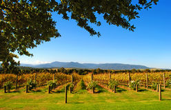 Yarra Valley Stock Photo