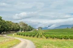 Yarra Valley, Australia. Vineyards on February 19, 2016 in Yarra Valley. Yarra Valley is one of Australia's premium wine growing regions stock images