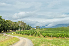 Yarra Valley, Australia Stock Images