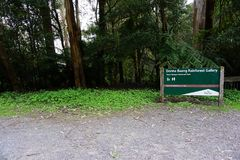 Yarra Valley Forest in Australia stock photography