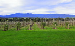 Yarra valley Stock Image