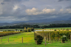 Yarra Valley vineyard in cloudy day Royalty Free Stock Image
