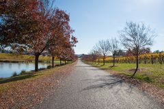 Yarra Valley Winery in Autumn Stock Image