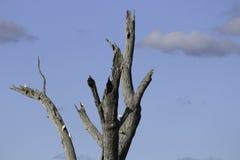 Yarrawonga. Lake Mulwala, NSW Australia Stock Image
