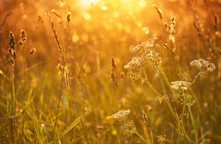 yarrow ηλιοβασιλέματος Στοκ φωτογραφία με δικαίωμα ελεύθερης χρήσης