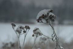 Yarrow το χειμώνα Στοκ εικόνα με δικαίωμα ελεύθερης χρήσης