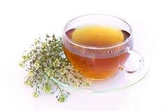 Yarrow чая стоковое изображение rf