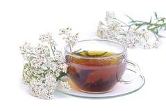 Yarrow 02 чая Стоковые Изображения