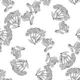 Yarrow Achilea Hand drawn sketched vector illustration. Doodle graphic. Seamless pattern Royalty Free Stock Photography