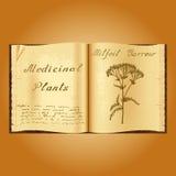 Yarrow Achillea millefolium . Botanical illustration. Medical plants. Book herbalist. Old open book Stock Images