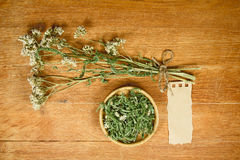 Yarrow. Dried. Herbal medicine, phytotherapy medicinal herbs. Royalty Free Stock Photo